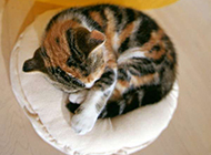 慵懒宠物猫咪高清图片特写