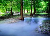 幽静的树林河流高清风景壁纸