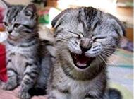 奇葩猫咪图片之笑点低