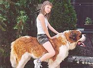 超搞笑动物图片之坐骑