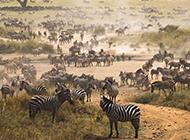野生动物图片摄影特写壁纸