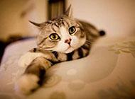 个性十足的可爱猫咪图片