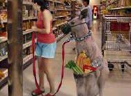 动物恶搞萌图之时髦的购物车
