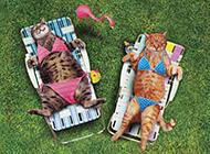 恶搞猫咪图片之晒日光浴