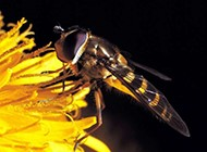 大自然中常见的昆虫图片