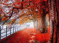 秋天森林美景高清图片