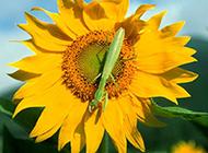 蜜蜂蝴蝶小动物高清图片