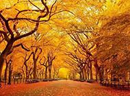 秋天风景图片壁纸唯美清新