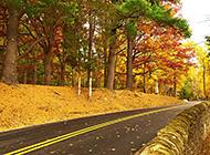 唯美秋天树林幽静道路意境风景图片