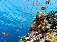 梦幻般的海底高清景色图片
