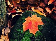 秋天落叶飘飘高清风景壁纸