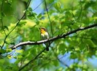 翩然归来的小鸟高清晰图片