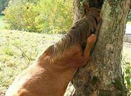 动物搞笑瞬间之贪玩的小马驹