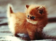 乖巧可爱的猫咪图集