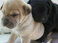 搞笑的狗狗图片之别离开我