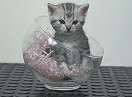 古灵精怪的小猫图片