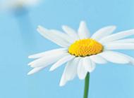 小清新春天花卉风景壁纸图片
