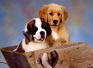 萌萌哒的狗狗高清动物壁纸