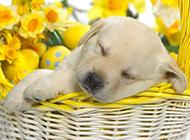 可爱呆萌的小狗狗动物图片