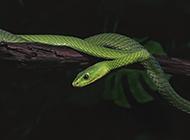 蛇年精彩特写图片大全