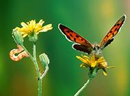 花蝴蝶高清小动物图片合集