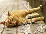被恶搞的萌猫咪图片