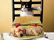 猫咪的大餐