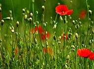 唯美花卉高清壁纸欣赏