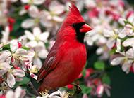 鸟类图片写真合集