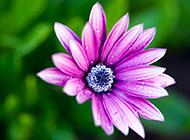 春天鲜花图片芬芳迷人