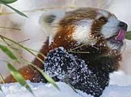 雪地里的动物高清写真图片