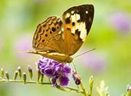 与花共舞的蝴蝶图片大全