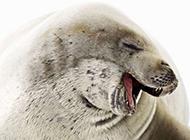 惹人喜爱的动物高清图片
