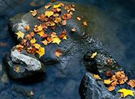 活力的秋天落叶风景壁纸赏析