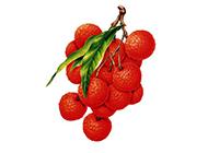 网友分享清晰绝美手绘水果高清图片