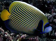 潜藏在海里的美丽动物