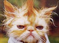 猫咪雷人发型图片搞笑逗人