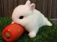 可爱兔子卖萌搞怪精选图