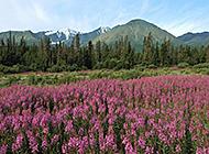 山水花卉自然风光组图