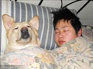 爆笑宠物趣图之狗狗也爱睡觉