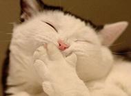 萌萌哒的动物萌表情图片