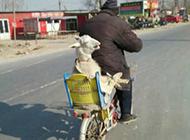 悟空骑电动车去西天取经咯趣味图