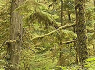 花草树木绿色植物护眼风景