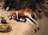 动物恶搞图片之贪杯的袋鼠