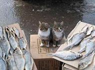 猫咪想吃鱼搞笑的亮点图片