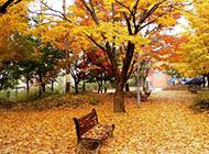 秋天落叶在风中摇摆摄影图片