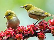 野生动物鸟类图片近距离摄影特写