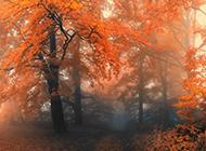 美丽的秋天落叶高清电脑壁纸