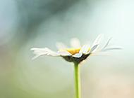 微观自然之春暖花开摄影组图