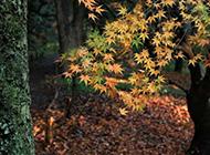 秋天落叶满地高清风景壁纸